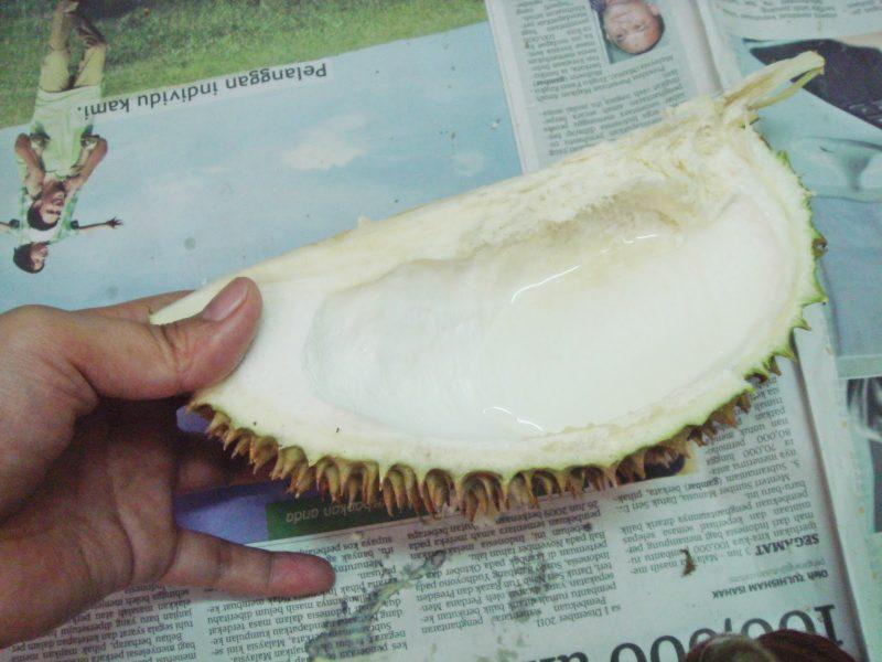 Image result for minum dalam pangsa durian
